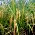 Pemda Sah-kan Perda Perlindungan Lahan Pertanian