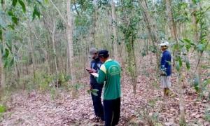 24 Hektar Hutan Dipetakan Kelompok Hutan Rakyat Rajawali, Lampung Tengah